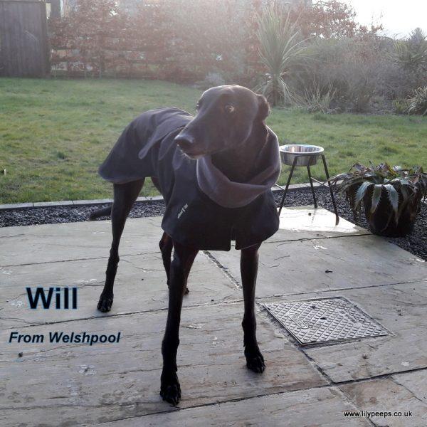 greyhound raincoat fleece lined black grey