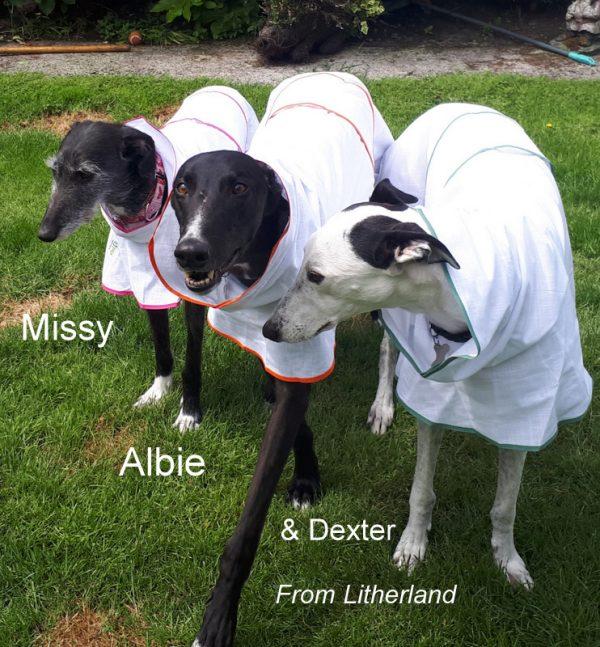 greyhound summer coat
