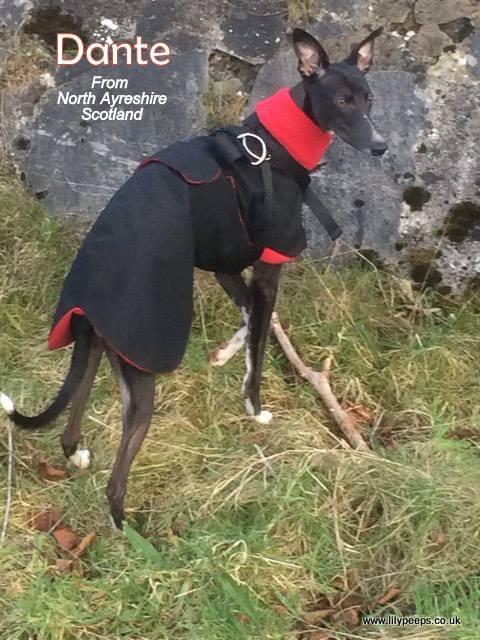 Dante - Whippet Raincoat - Black/Red Fleece