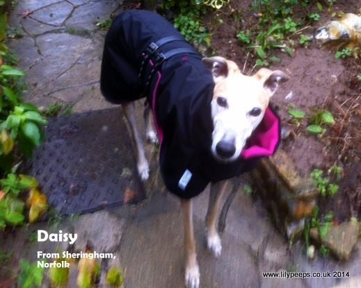 Greyhound Raincoat black fuchsia pink fleece lining