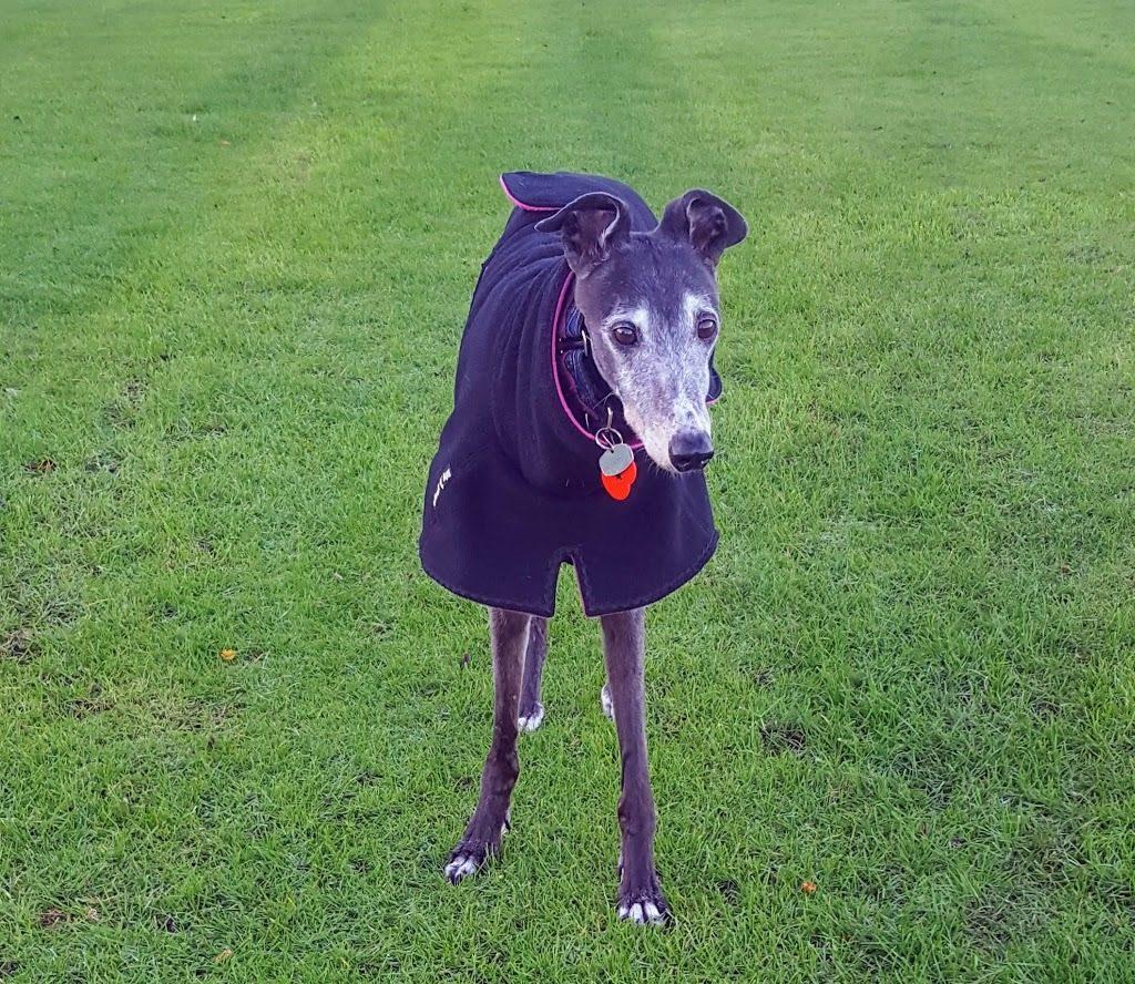 greyhound double fleece coat black fuchsia