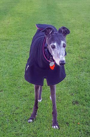 Greyhound Double Fleece