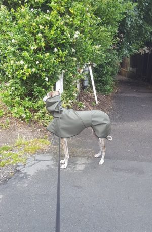 Whippet Shower Mac with Hood