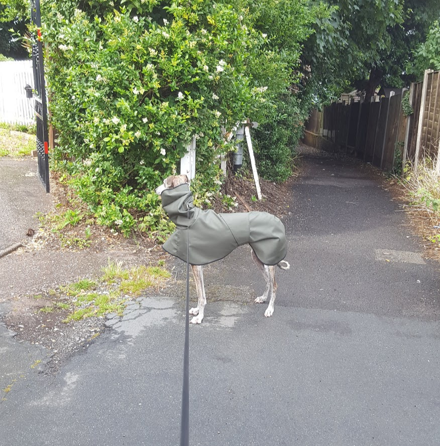 Whippet Shower Mac with Hood Dark Olive Black Trim