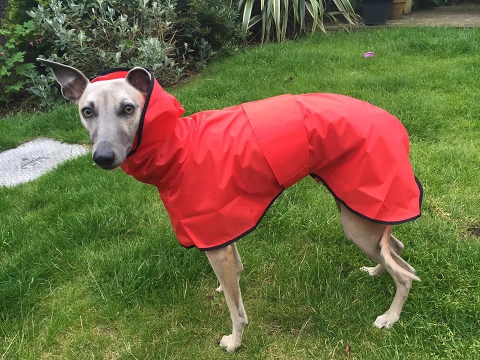 whippet shower mac red