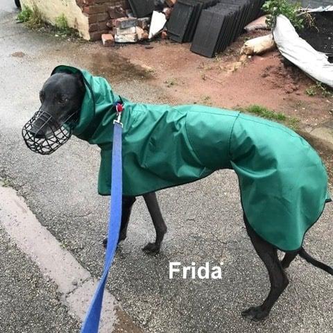 Frida - Greyhound Shower Mac - Leaf Green/black trim