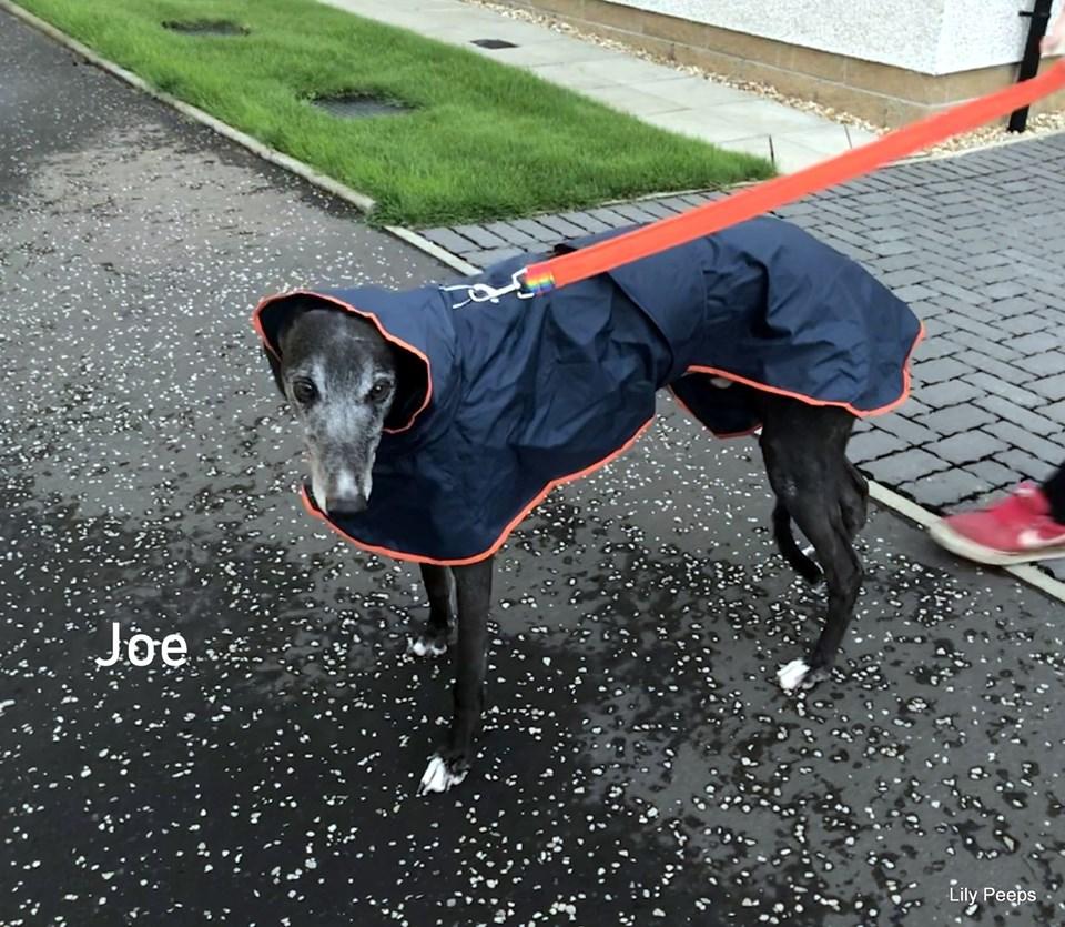greyhound shower mac black  orange trim