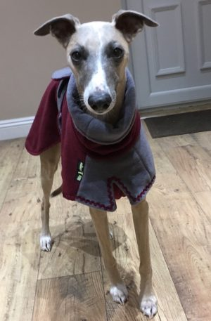 Whippet Double Fleece – Twin Top