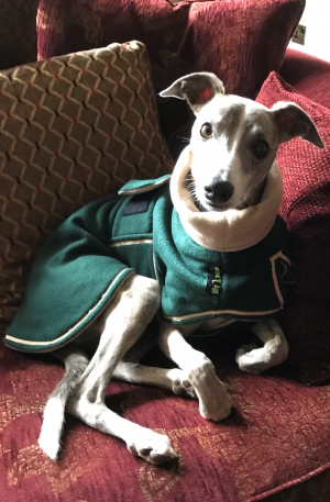 Whippet Double Fleece