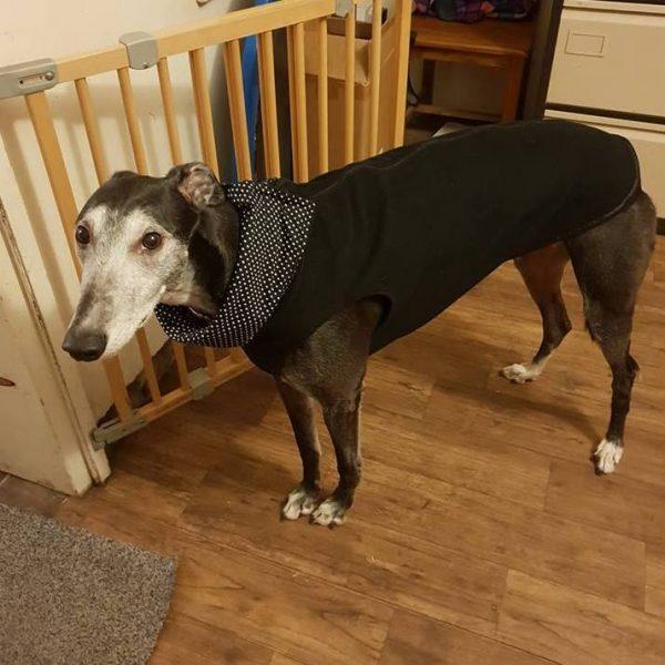 Greyhound vest black black small spot snood lining