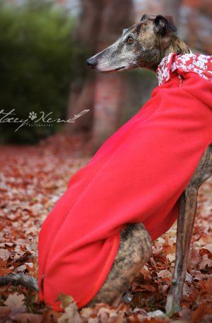 Greyhound Vest