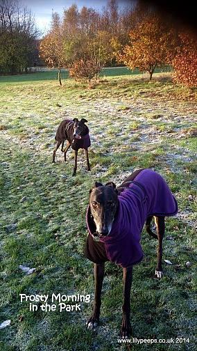 greyhound double fleece twin top black-purple