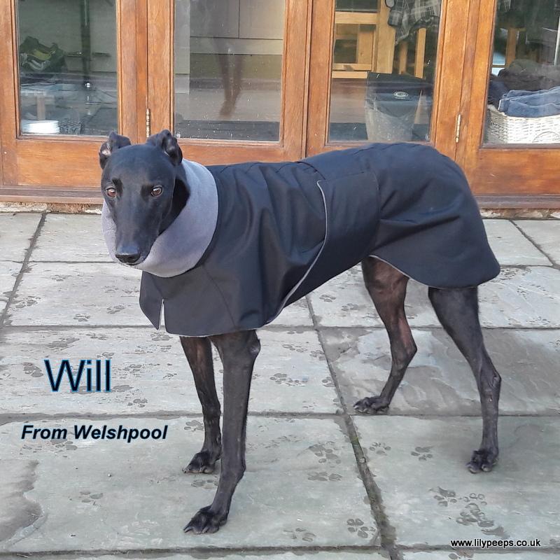 Greyhound Raincoat - Black - Grey Fleece
