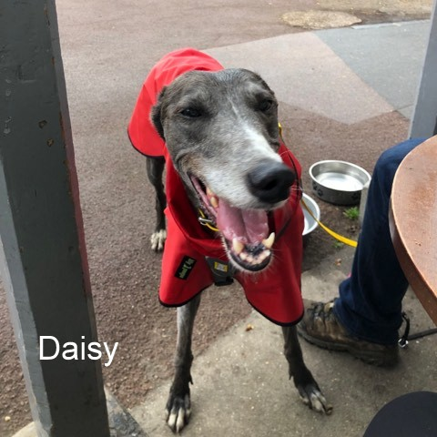 Daisy from London - Shower Mac Red Black trim