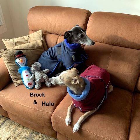 Brock & Halo - Double Fleece Coats 1) Navy+Royal Lining, 2) Wine+Cornflower Blue lining