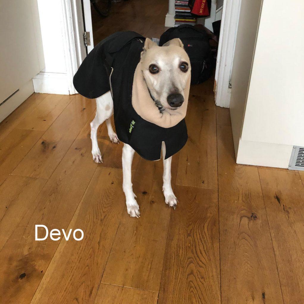 Devo from Bath - Whippet - Black Raincoat Camel Fleece Lining