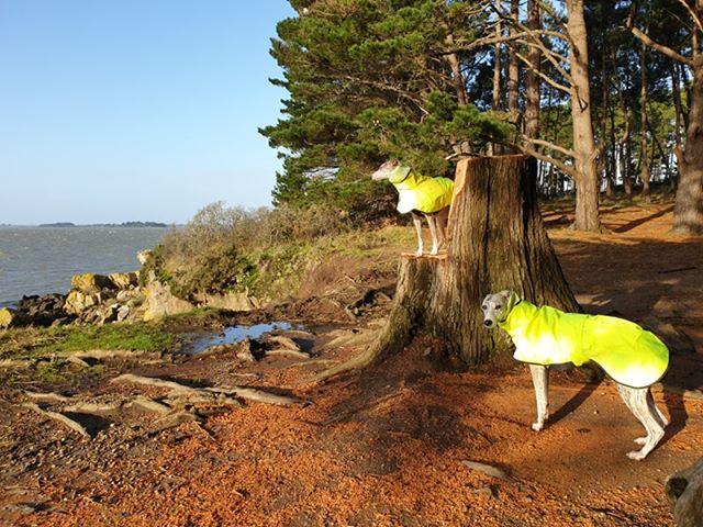 Nonnette & Nouka from Brittany - Shower Macs - Hi Viz Yellow+Black trim