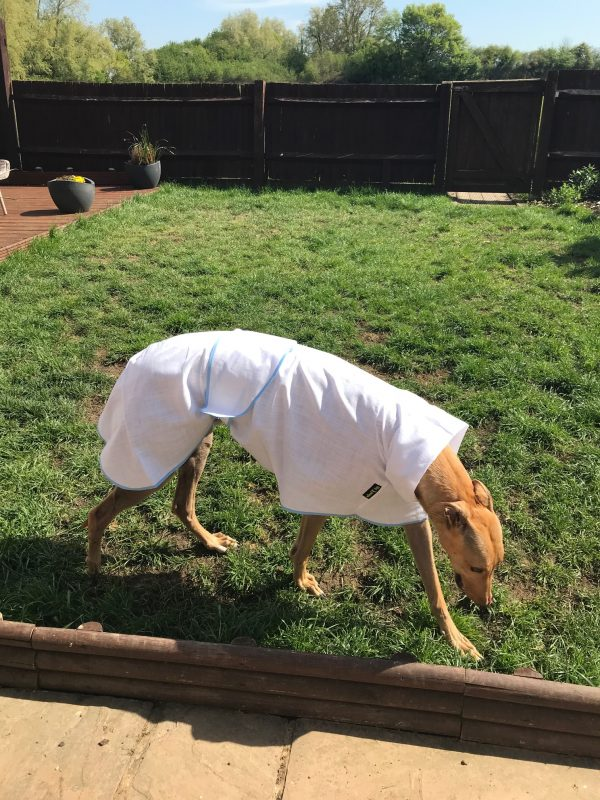 whippet summer coat