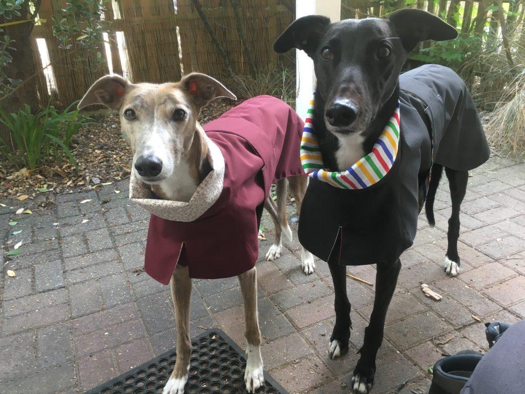 Sable and Jock  Greyhound Raincoats - Burgundy/Pink Rosebuds on Cream -  Black/Harlequin Stripe