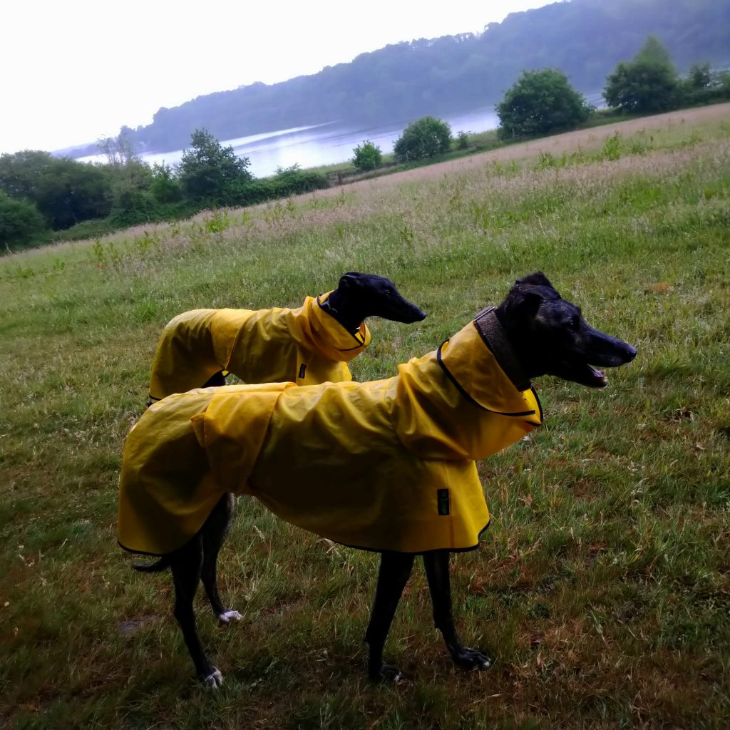 Carys (front) & Sol - Shower Macs Canary Yellow/Black Trim