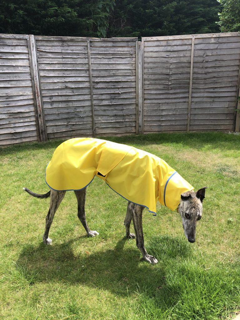 Renly - Greyhound Shower Mac Canary Yellow/Pale Blue Trim