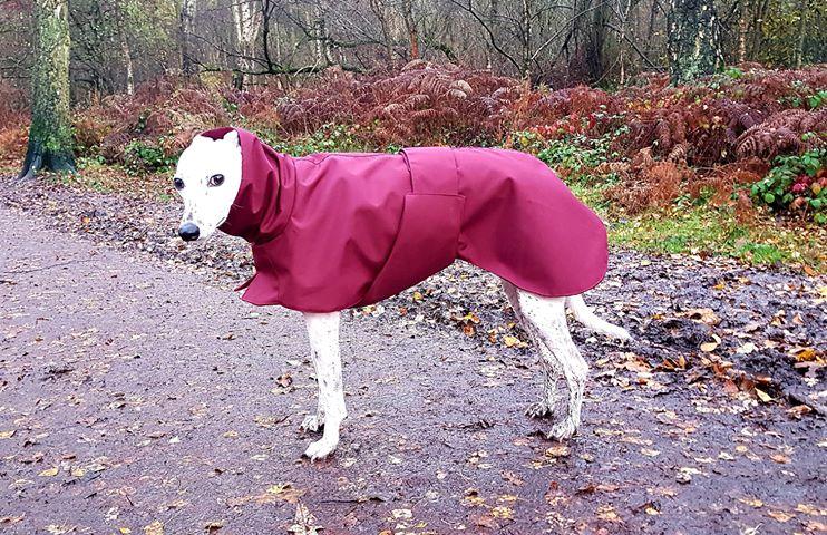Dice from Shrewsbury - Whippet Raincoat/Burgundy/Wine Fleece Lining