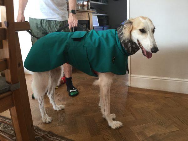 Greyhound raincoat teal grey spot cotton lining