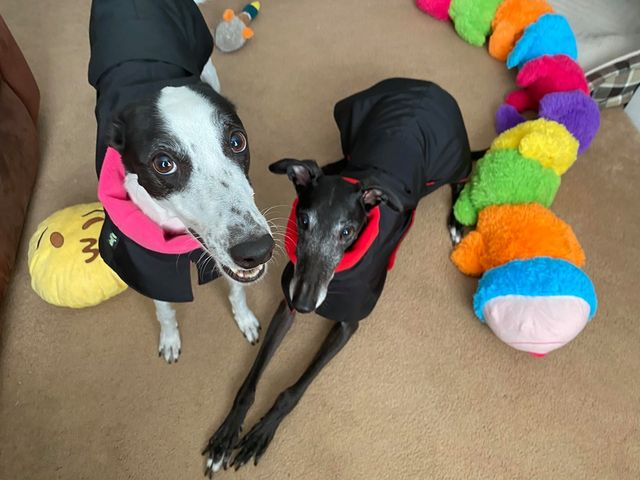 Ada (left) & Norman from Sheffield - Greyhound Raincoats Fleece Lined
