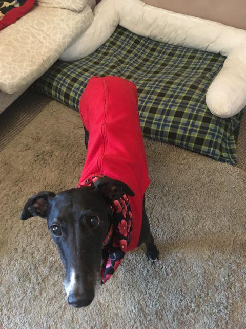 Greyhound Vest Red Poppies on Black Snood Lining