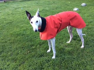 Moomin from Norwich - Greyhound Raincoat - Red/Black Fleece lining