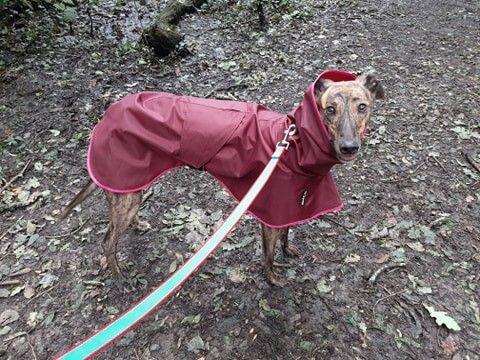 Pippa from Cardiff - Shower Mac Claret/Fuchsia Pink Trim