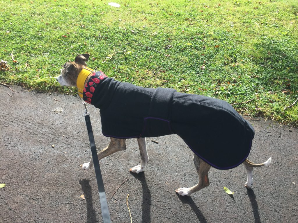 Tigger - Greyhound Single Fleece - Black/Poppies on Black