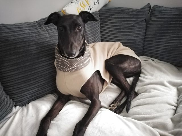 Olivia from Walsall - Greyhound Vest Camel/Mink Spot Snood lining
