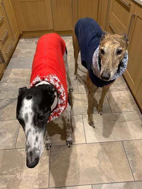 Greyhound Vests Red - Rabbits on Red Snood