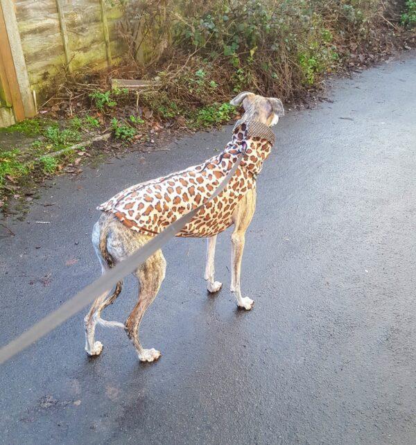 Greyhound Leopard Fleece Vest