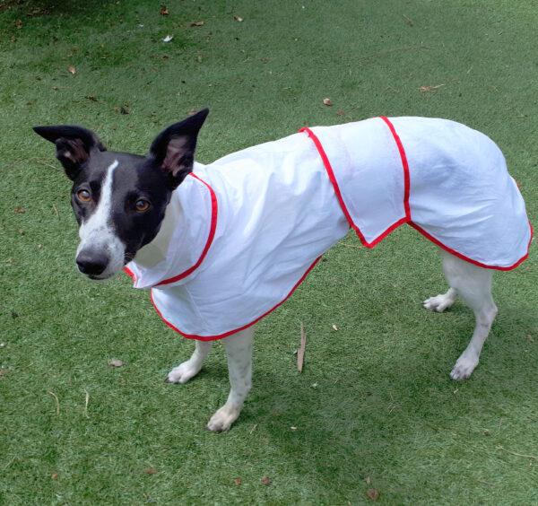 Whippet Summer Coat